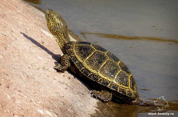 Красивые черепахи. CC0