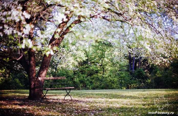 Деревья для сада. CC0