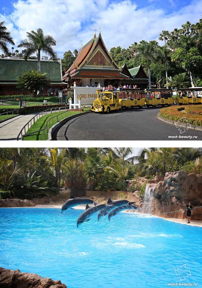 Самые красивые зоопарки: Лоро-парк. CC0