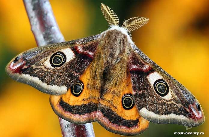 Ночные бабочки. CC0
