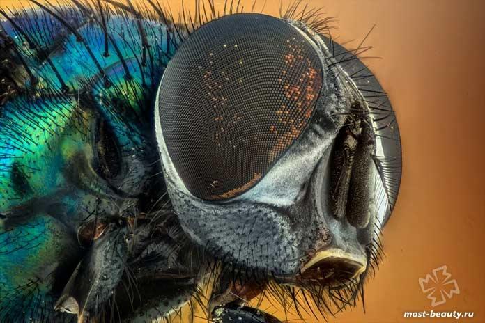 Очень необычные насекомые: Муха