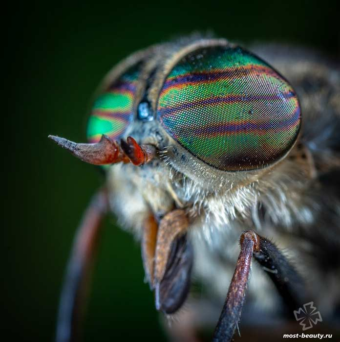 Макро фото. Глаза мухи. CC0