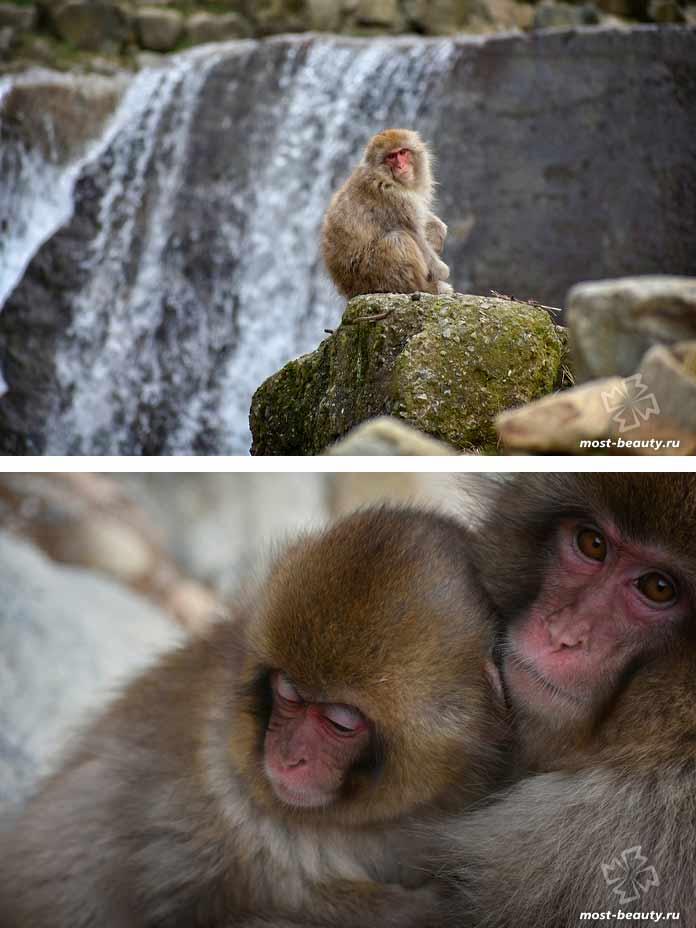 Парк снежных обезьян Джигокудани. CC0
