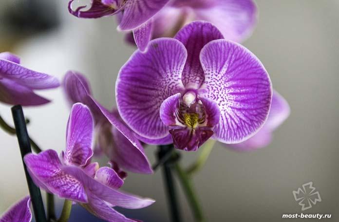 Очень красивые фото орхидей