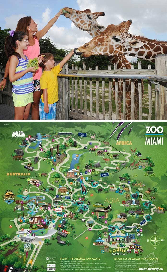 Зоопарк солнечного Майами