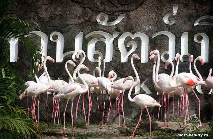 Тайский зоопарк
