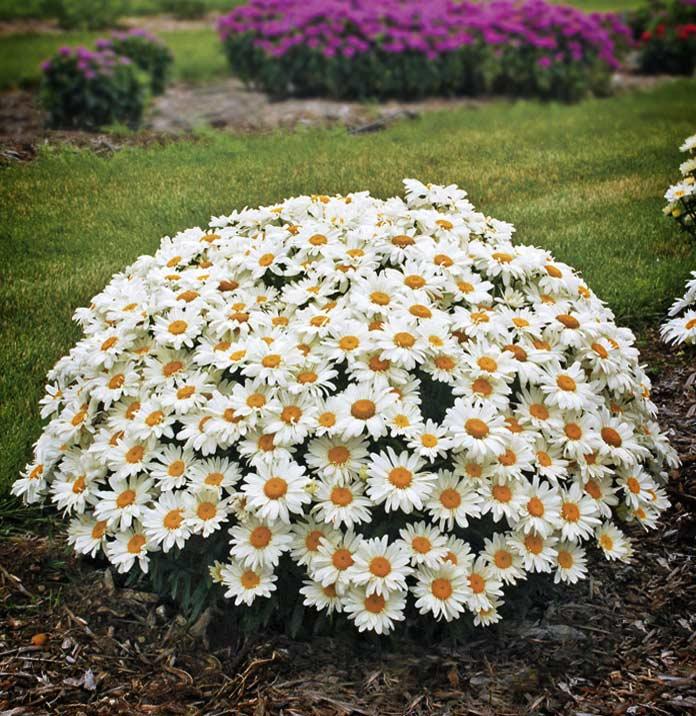 Цветок с белыми лепестками название