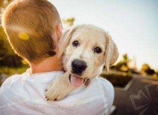 Семейные собаки. CC0