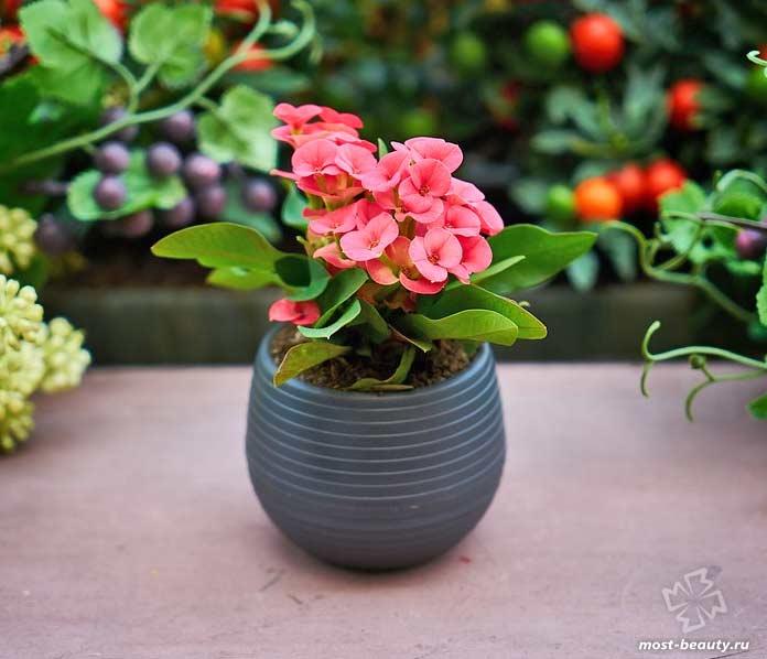Комнатные цветы. CC0