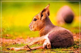 Животные Австралии. CC0