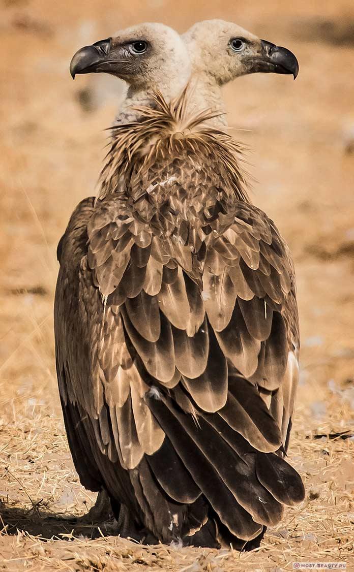 Двухглавый орел