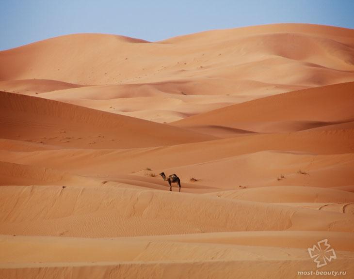Пустыня Каракумы. CC0