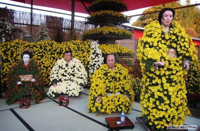 Красивые Хризантемы в Японии