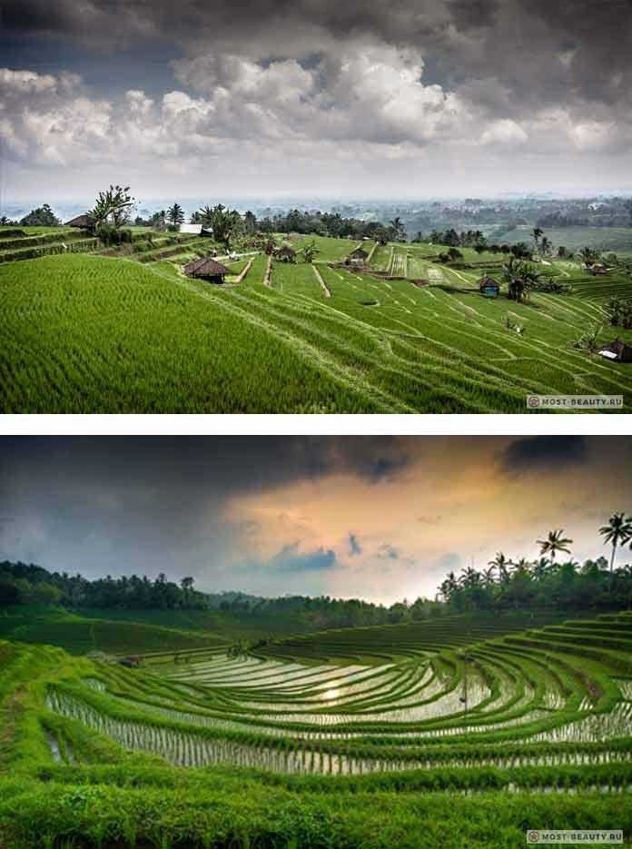 Рисовые поля Джатилувих (riziere jatiluwih bali)