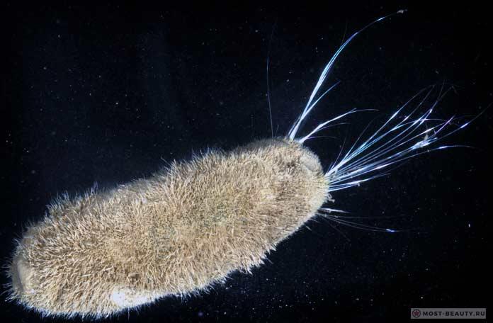 Многощетинковый червь