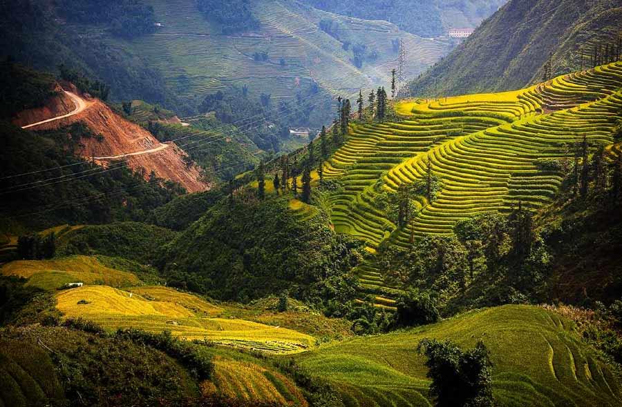 Прекрасные рисовые поля