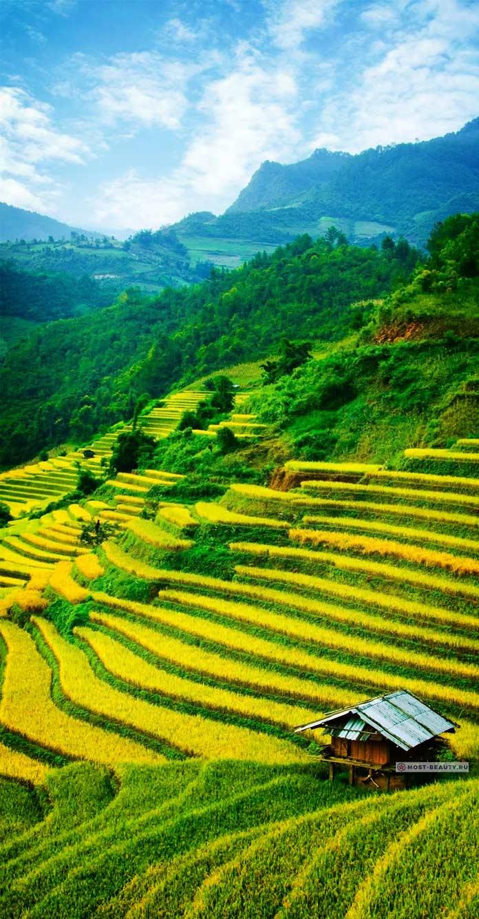 Красивые рисовые террасы