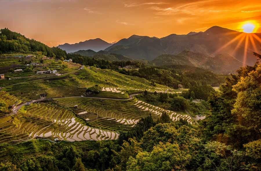 Пейзаж с рисовыми полями