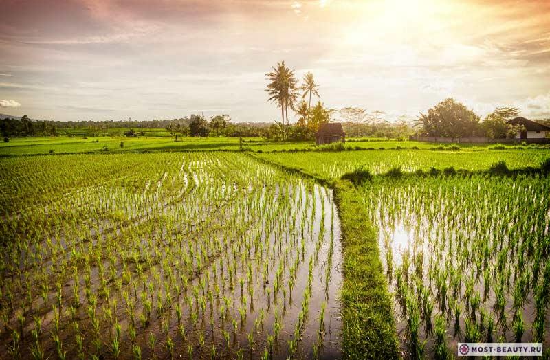 Тегаллаланг Индонезия