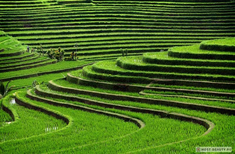 Тегаллаланг, Индонезия