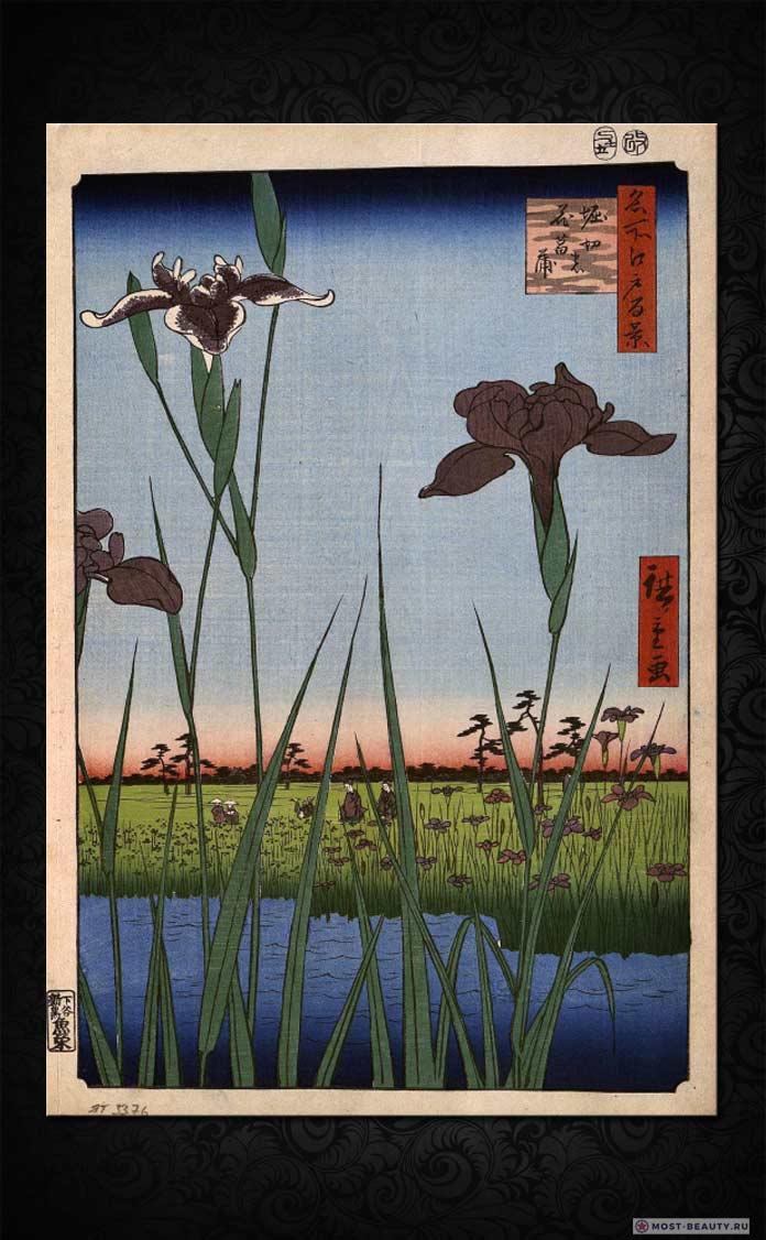 Утагава Хиросигэ - Ирисы в Хорикири