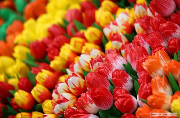 Роскошные тюльпаны