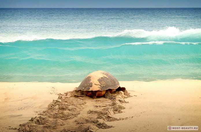 boa vista Turtle