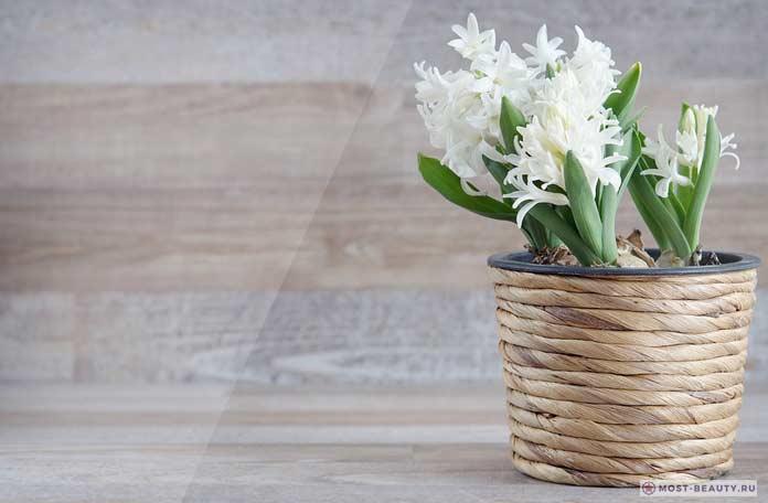 Белый гиацинт в вазе
