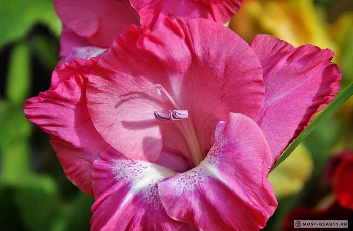 Сиренево-лиловые цветы