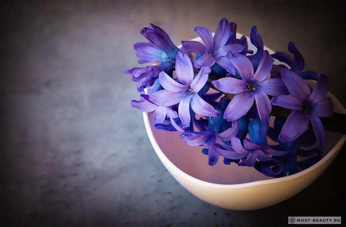 Синие гиацинты фото