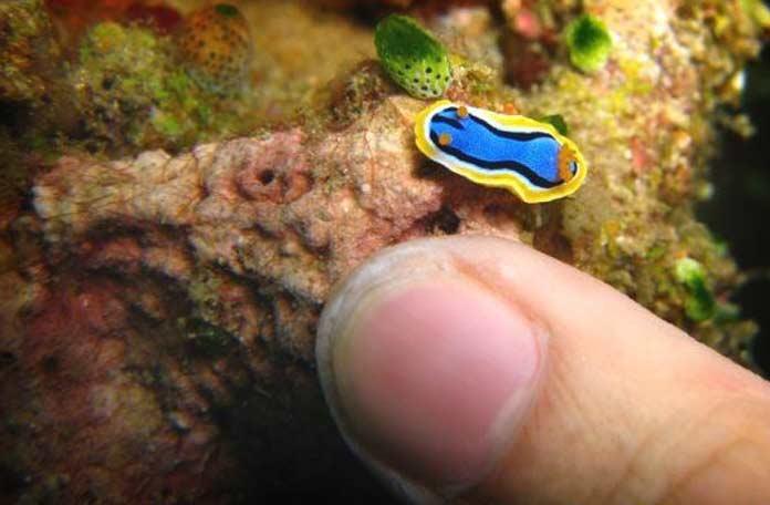 ТОП-10 необычайно маленьких, но очаровательных водных существ