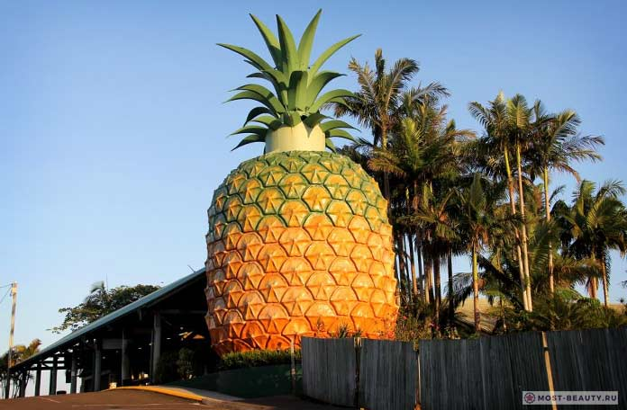 Большой ананас