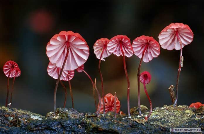 Очень красвые грибы