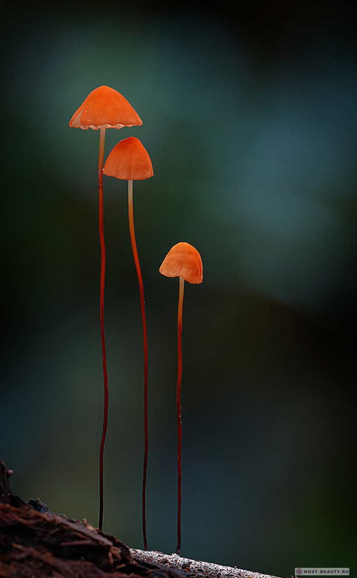 Оранжевые грибы на фото