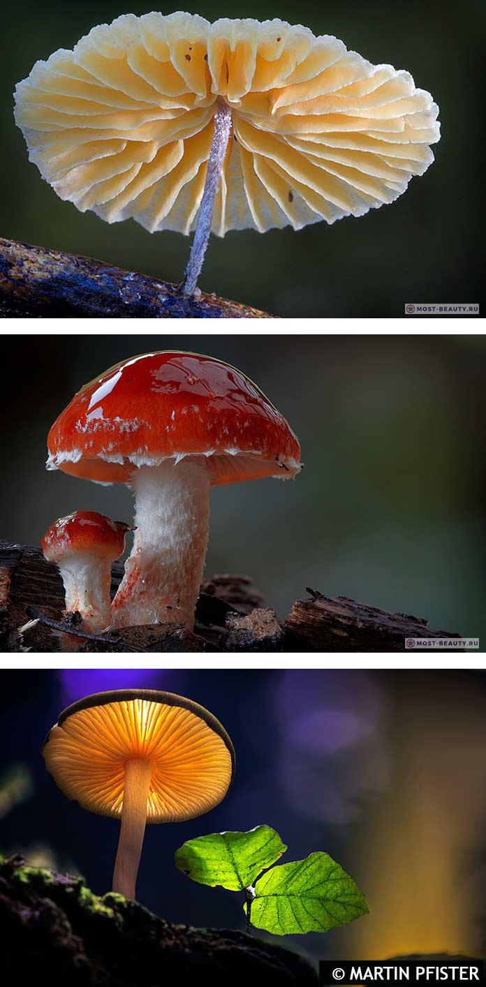 Самые красивые фото грибов