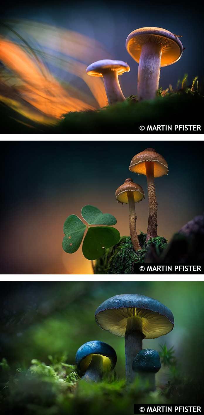 Лучшие фото грибов