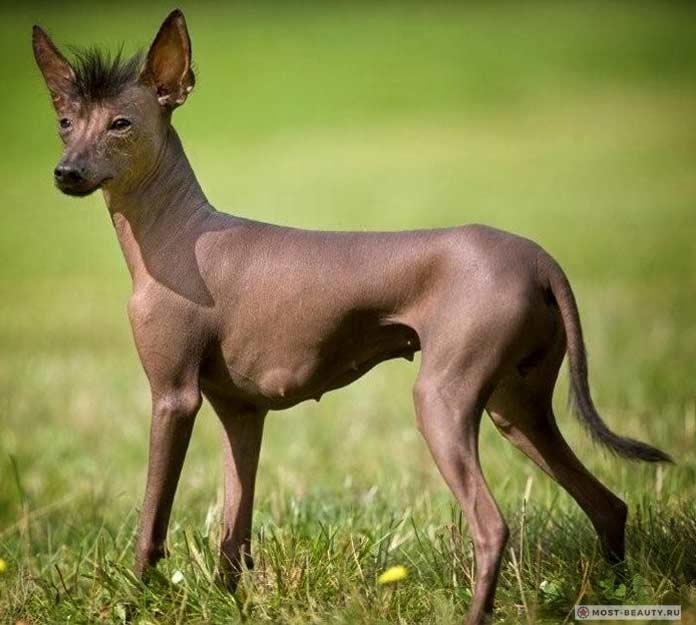 10 самых страшных пород собак
