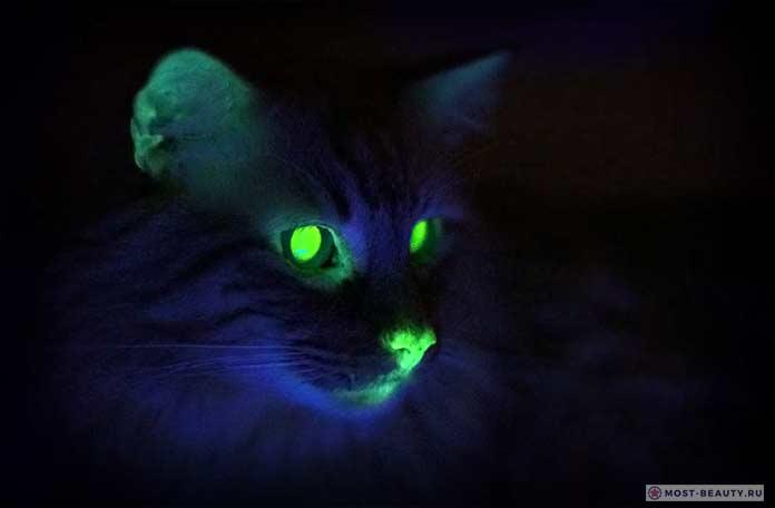 Светящиеся в темноте кошки