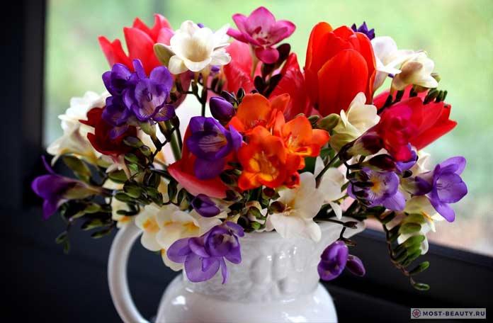 фрезии и тюльпаны