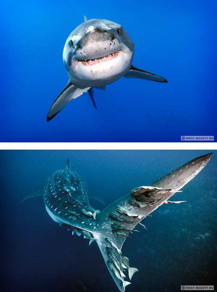 Самые красивые акулы в мире