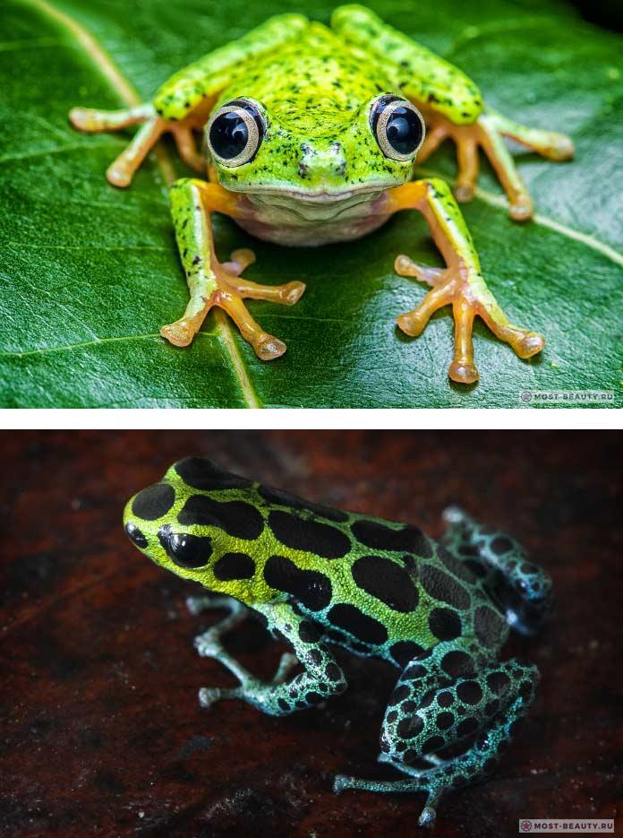 Красивые фотографии лягушек