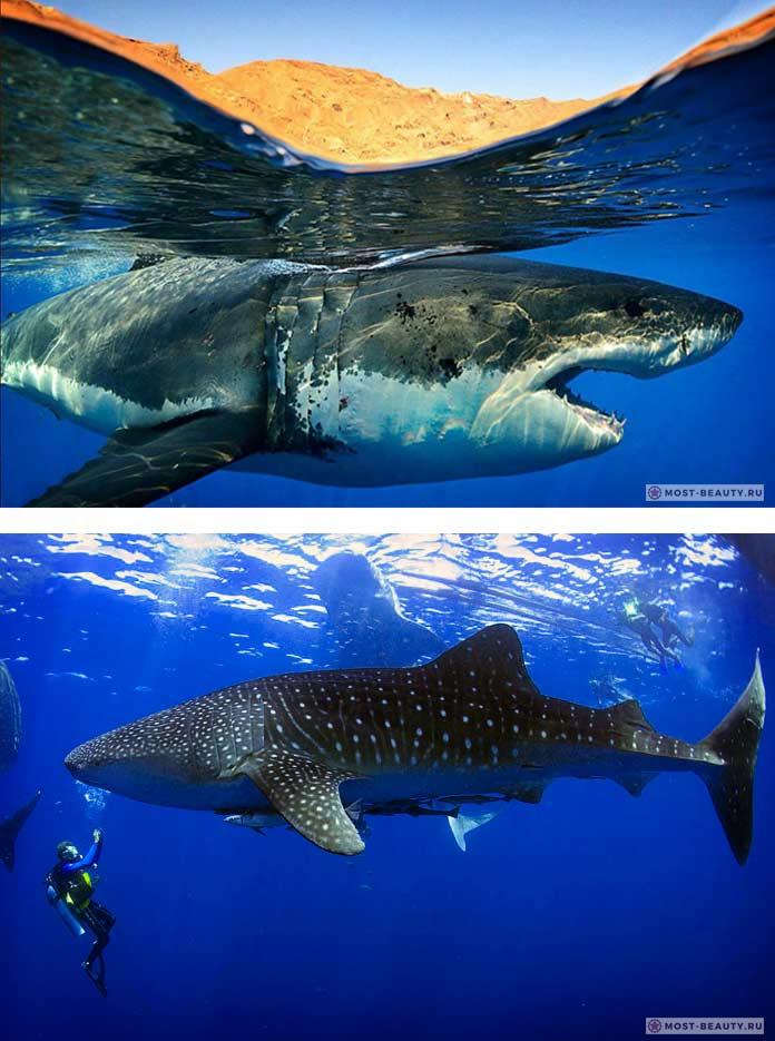 Красивые акулы