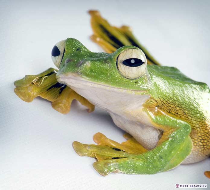 Изображение лягушки