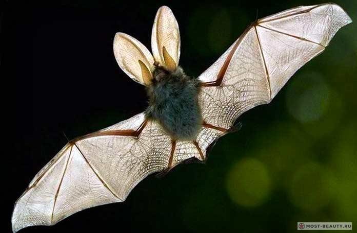 Самые красивые летучие мыши