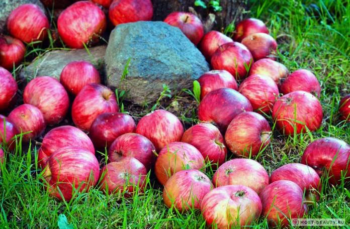 Яблоки от астмы