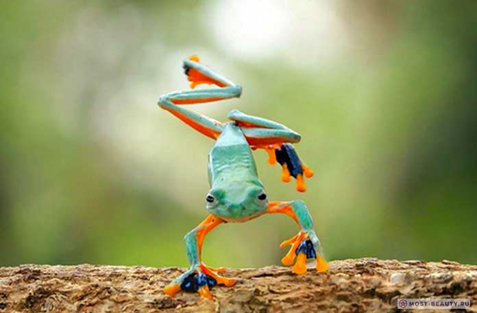 Самые красивые лягушки в мире