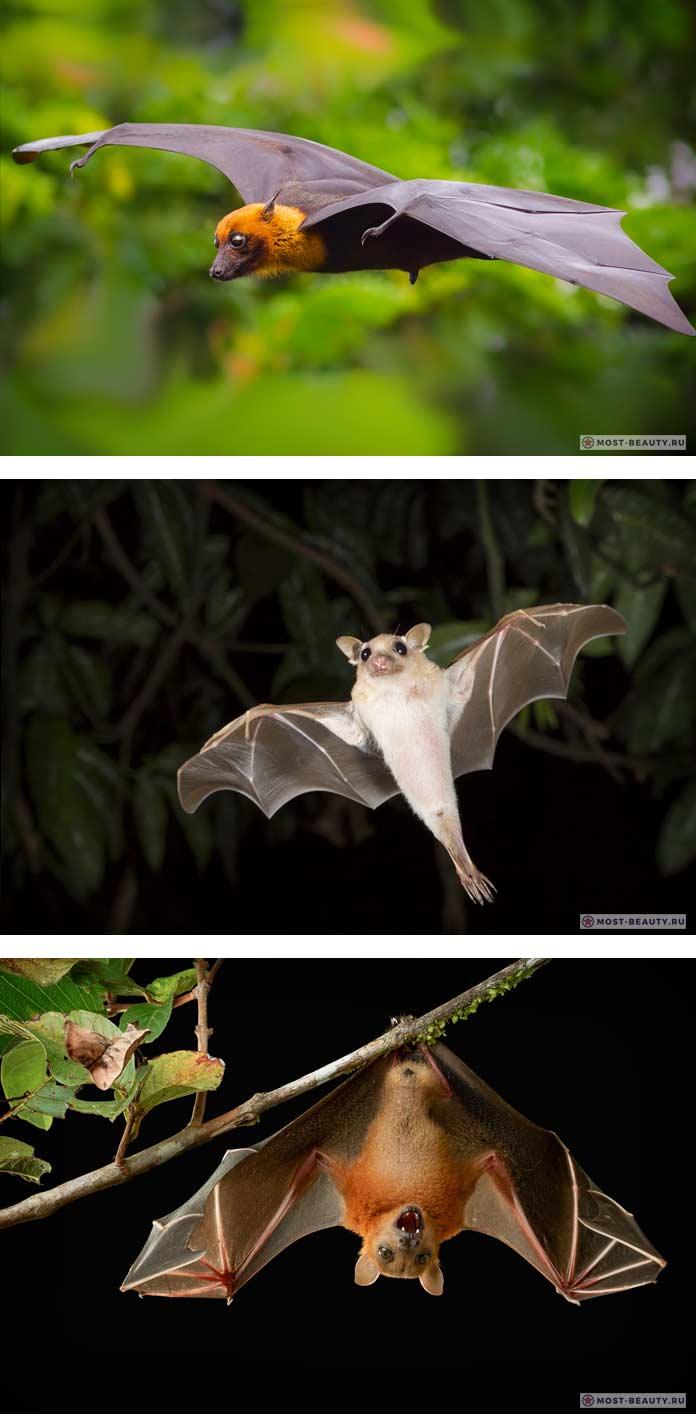Фото красивых летучих мышей
