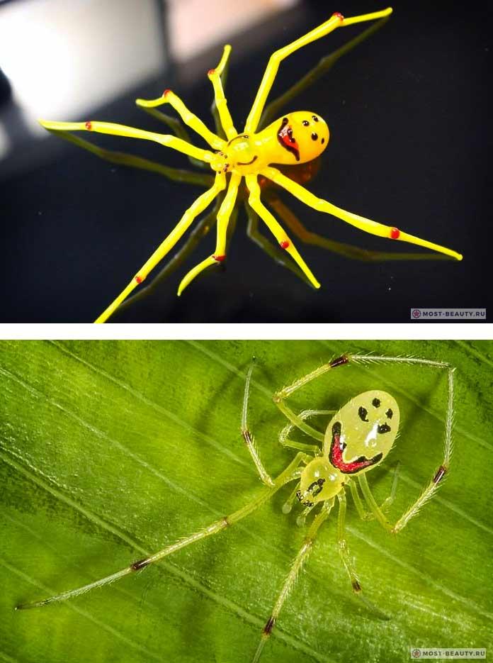 Улыбчивый паук