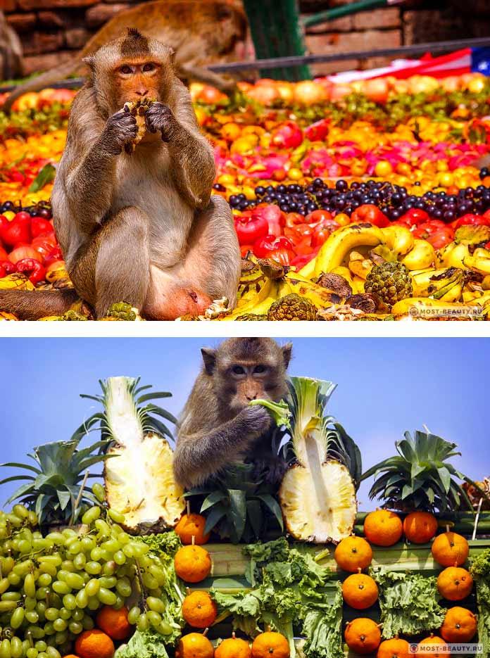 Банкет обезьян