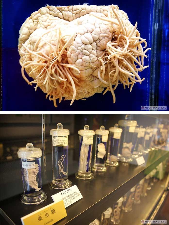Музей паразитологии
